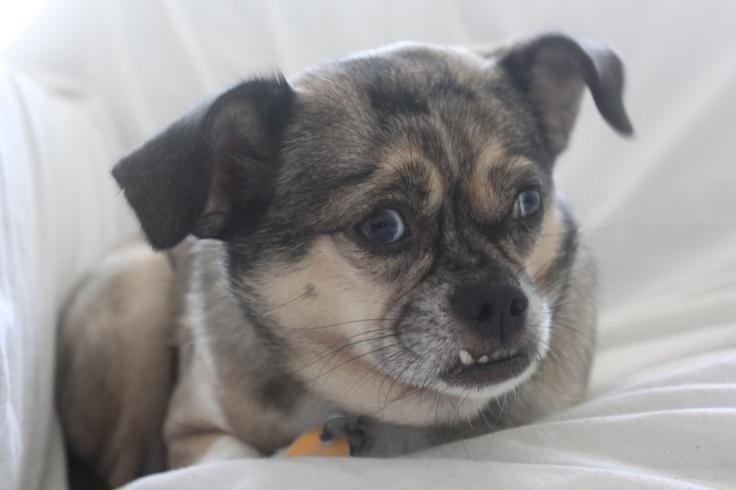 Sadie ponders